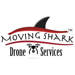 Moving Shark